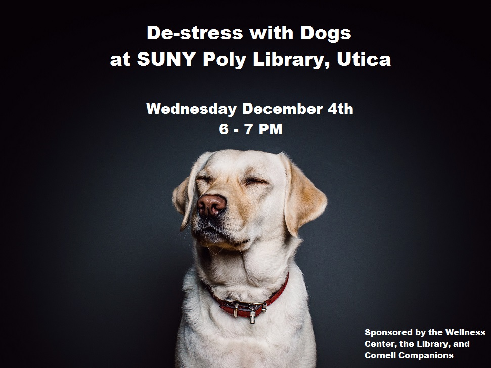 Photo of a yellow lab advertising therapy dog event at SUNY Poly Cayan Library